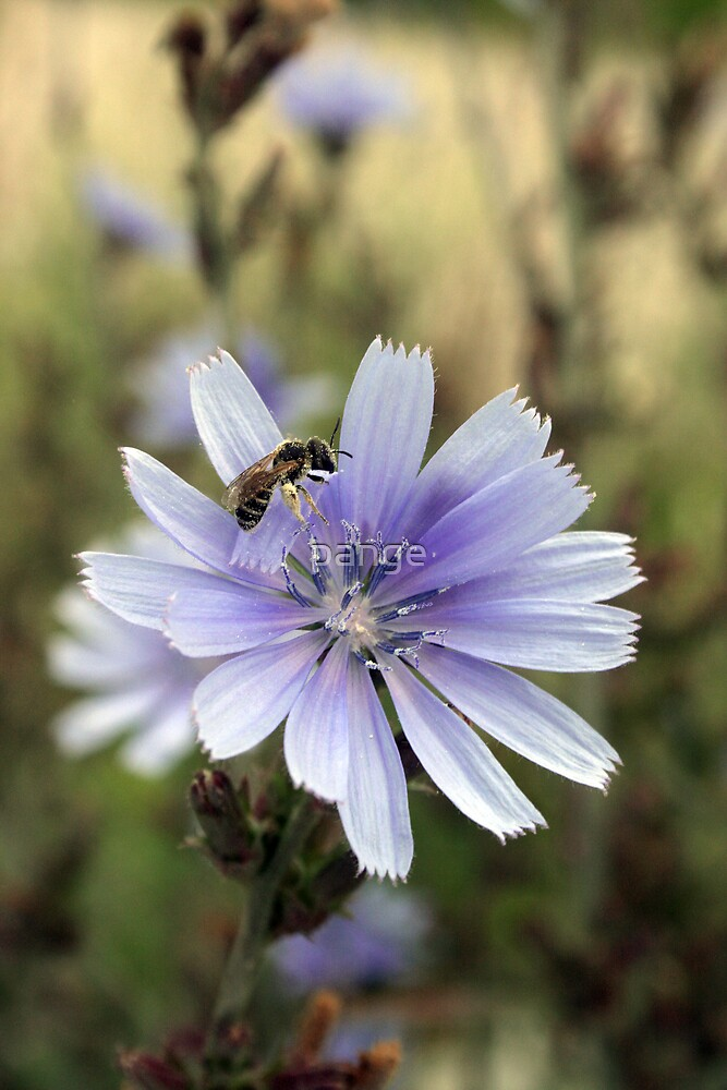 Pollination by pange