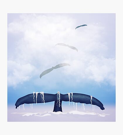Flying whale Photographic Print