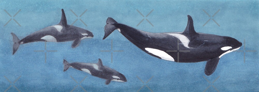 Pod of orca's by DutchOrca