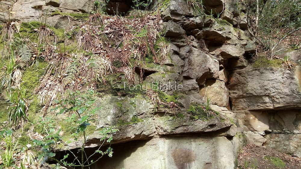 Rock face at Gibside by Tony Blakie