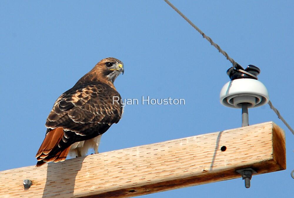 Red-Tailed Hawk - Lehi, Utah by Ryan Houston