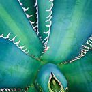 Agave Avellanidens by alan shapiro