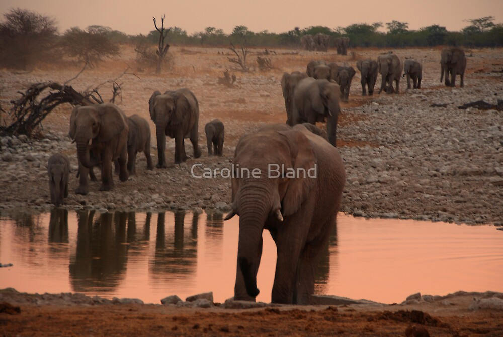Evening Procession to the Waterhole by Caroline Bland