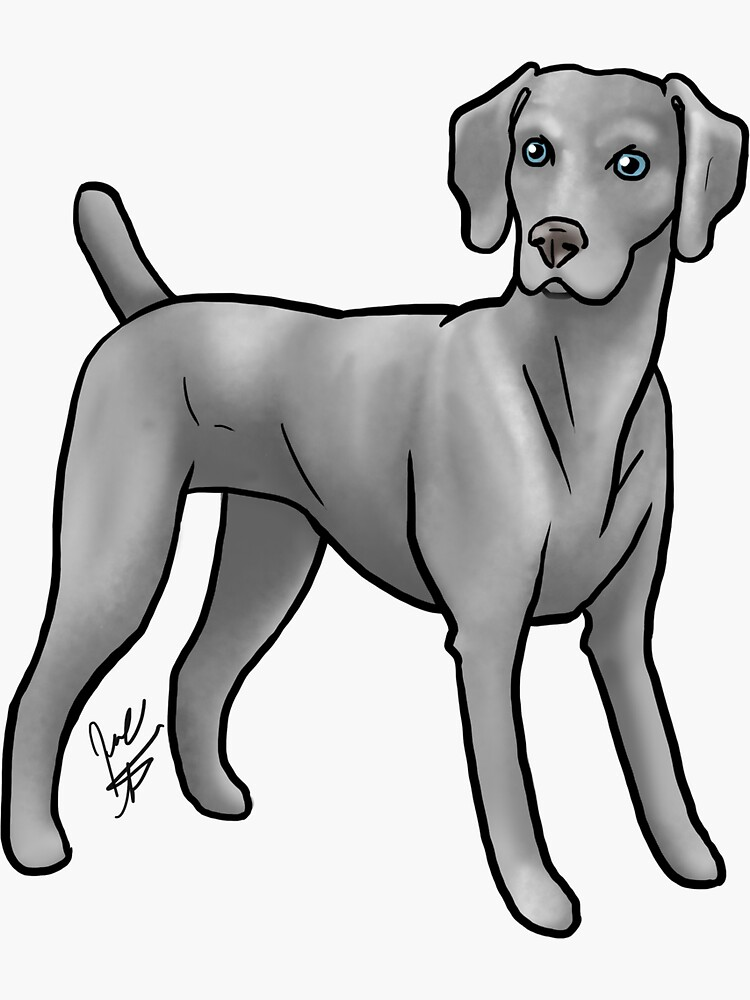 Weimaraner by jameson9101322