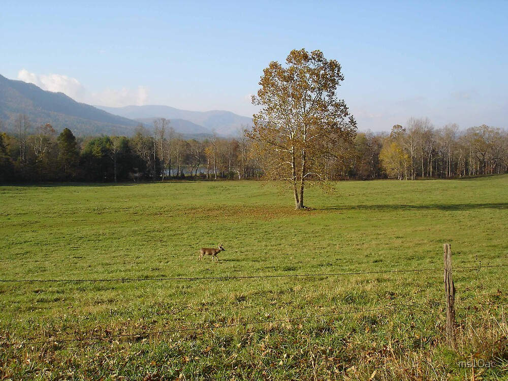 Cades Cove Deer by ms10ac