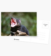 Tasmanian Devil Postcards