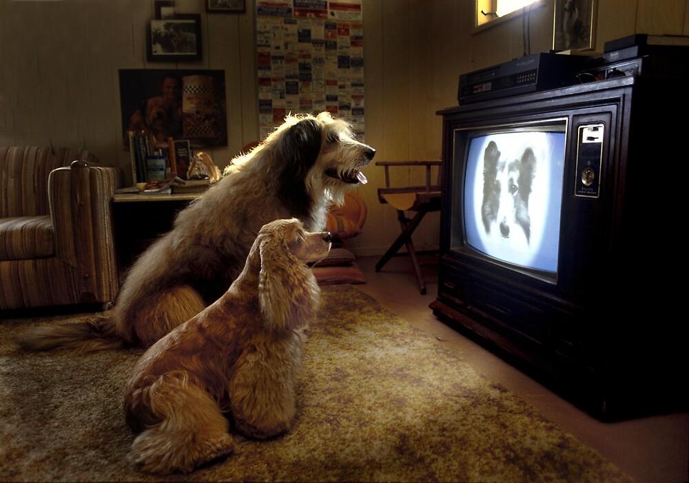 MY FAVORITE TV PROGRAM   by POOPIE