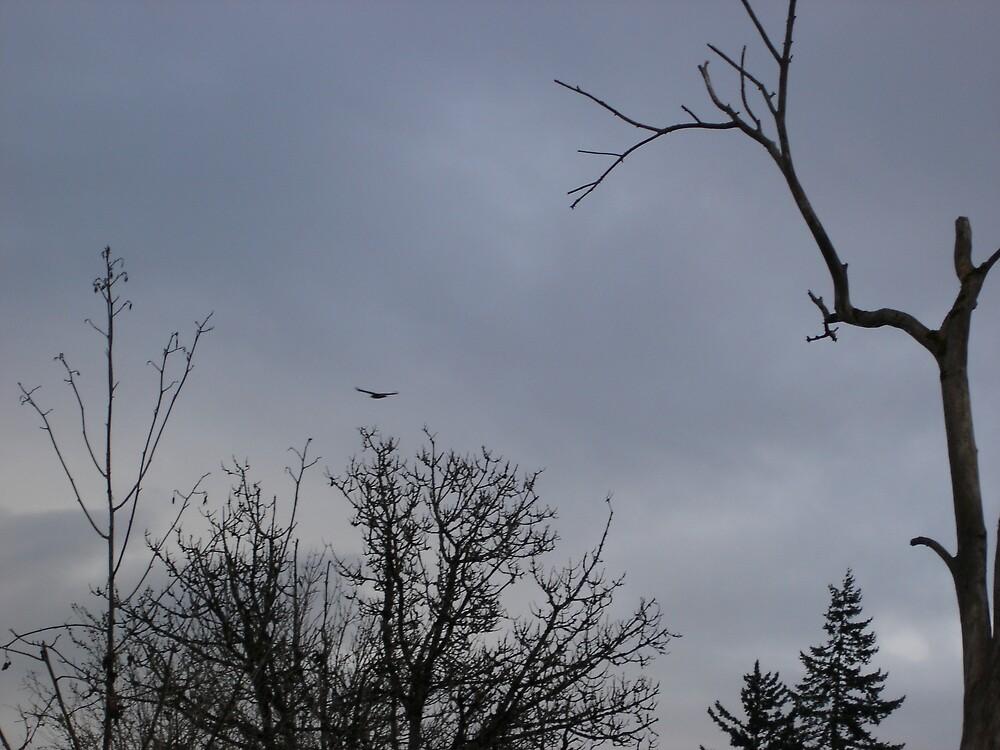 Fly Away Home by Jillian  Shellabarger