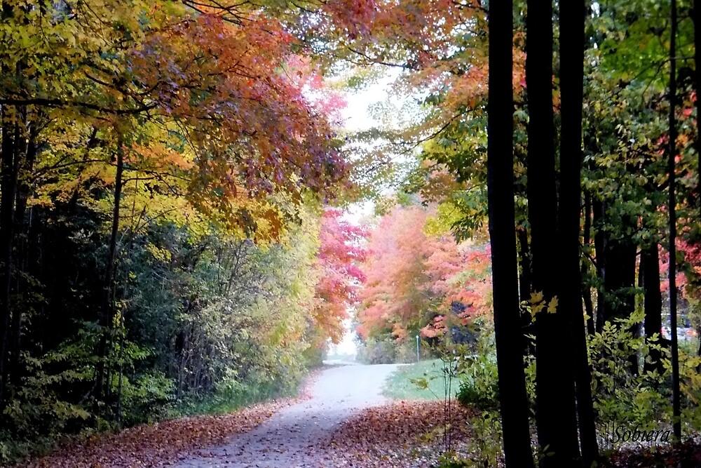 Autumn on the Way - card by Rosemary Sobiera
