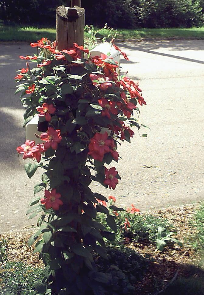 Blossom Mail by Abbetha Smith