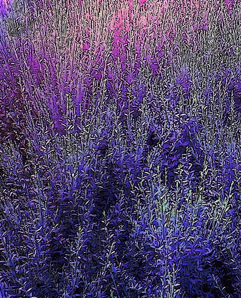 Blue Field by Abbetha Smith