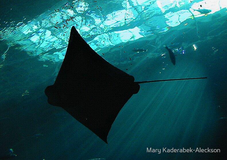 Sting Ray by Mary Kaderabek-Aleckson