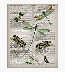 Dragonflies on Psalms 121 Photographic Print