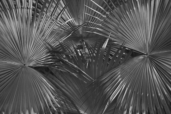 black and white palm leaves by AnnaGo
