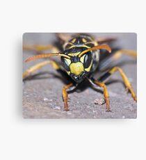 Winter Wasp ! Canvas Print
