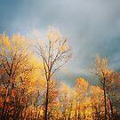 Autumn light on treetops by Hickoryhill
