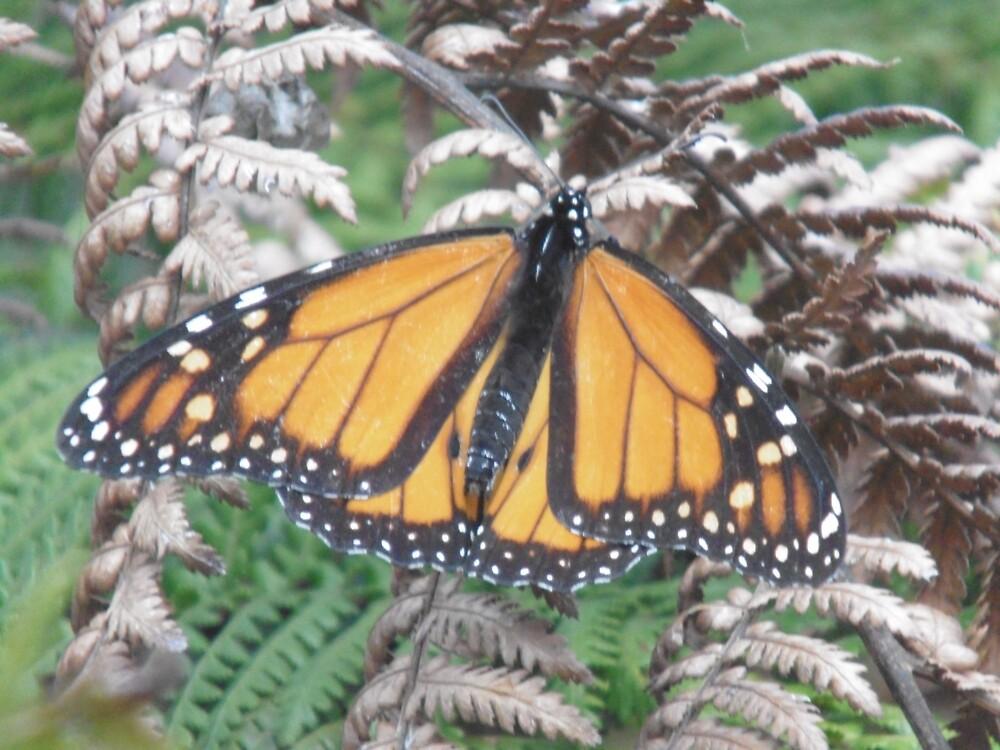 Winters Last Monarch Butterfly by puginajug