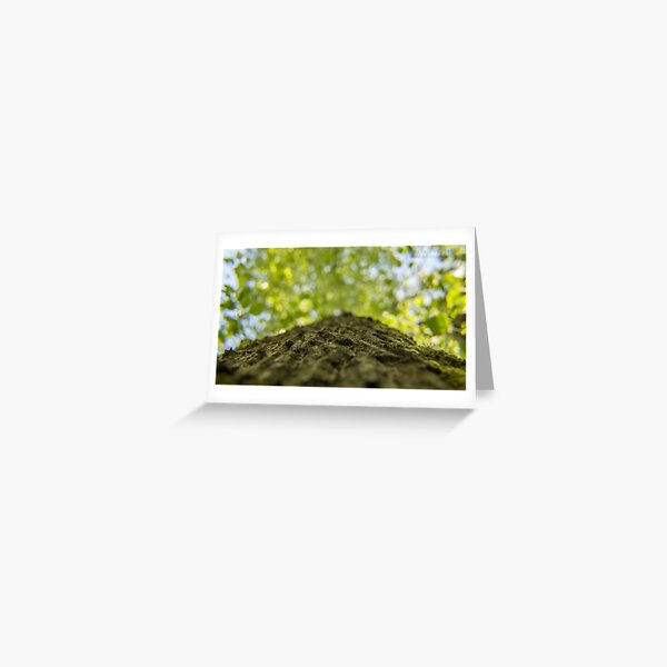 To the sky through the trees Greeting Card