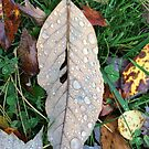 Autumn leaf with rain drops by Hickoryhill