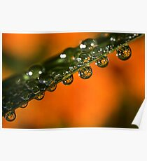 Marigolds trapped in raindrops Poster