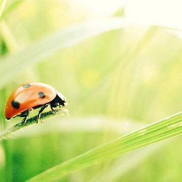 Ladybug by apricotcoffee