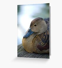 Black Duck Greeting Card
