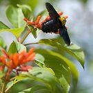 Bee in flight by palmerphoto