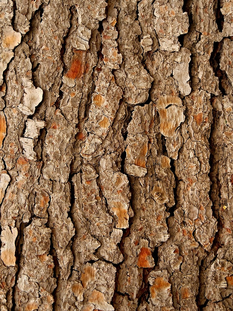 Pine Tree Bark by TianxinZheng