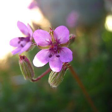 Arizona bloom by apricotcoffee