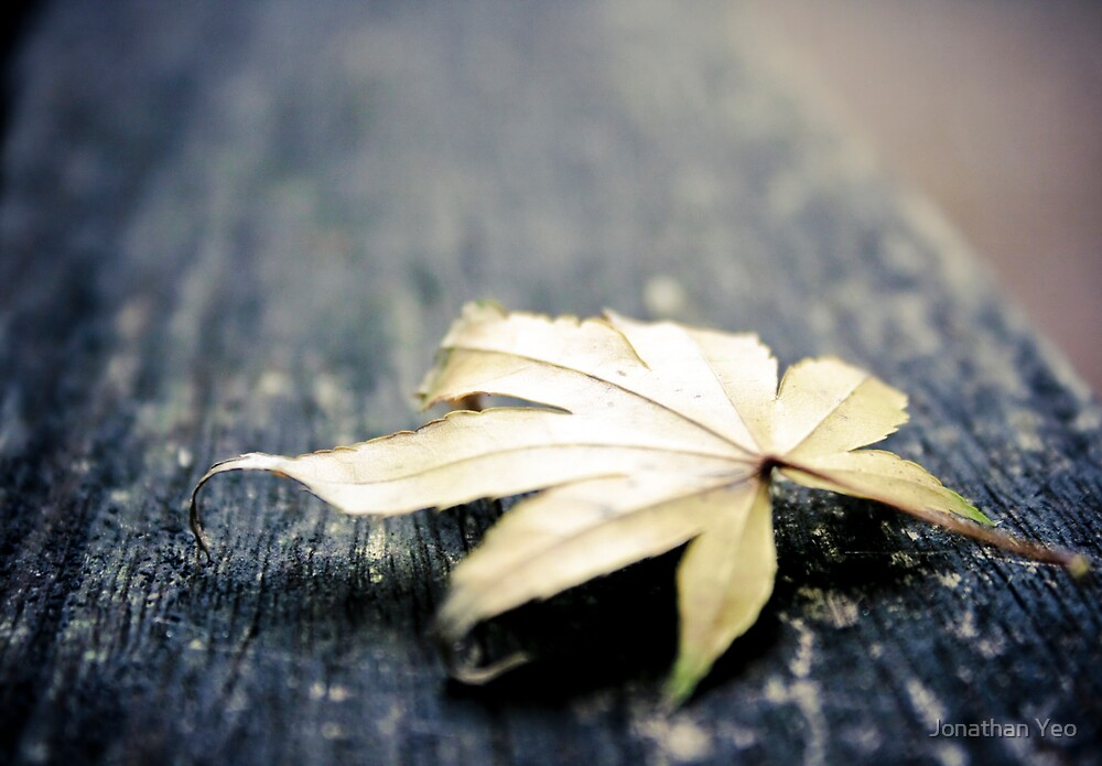 Solitary Leaf by Jonathan Yeo