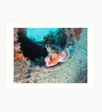 Perched Sea Perch Art Print