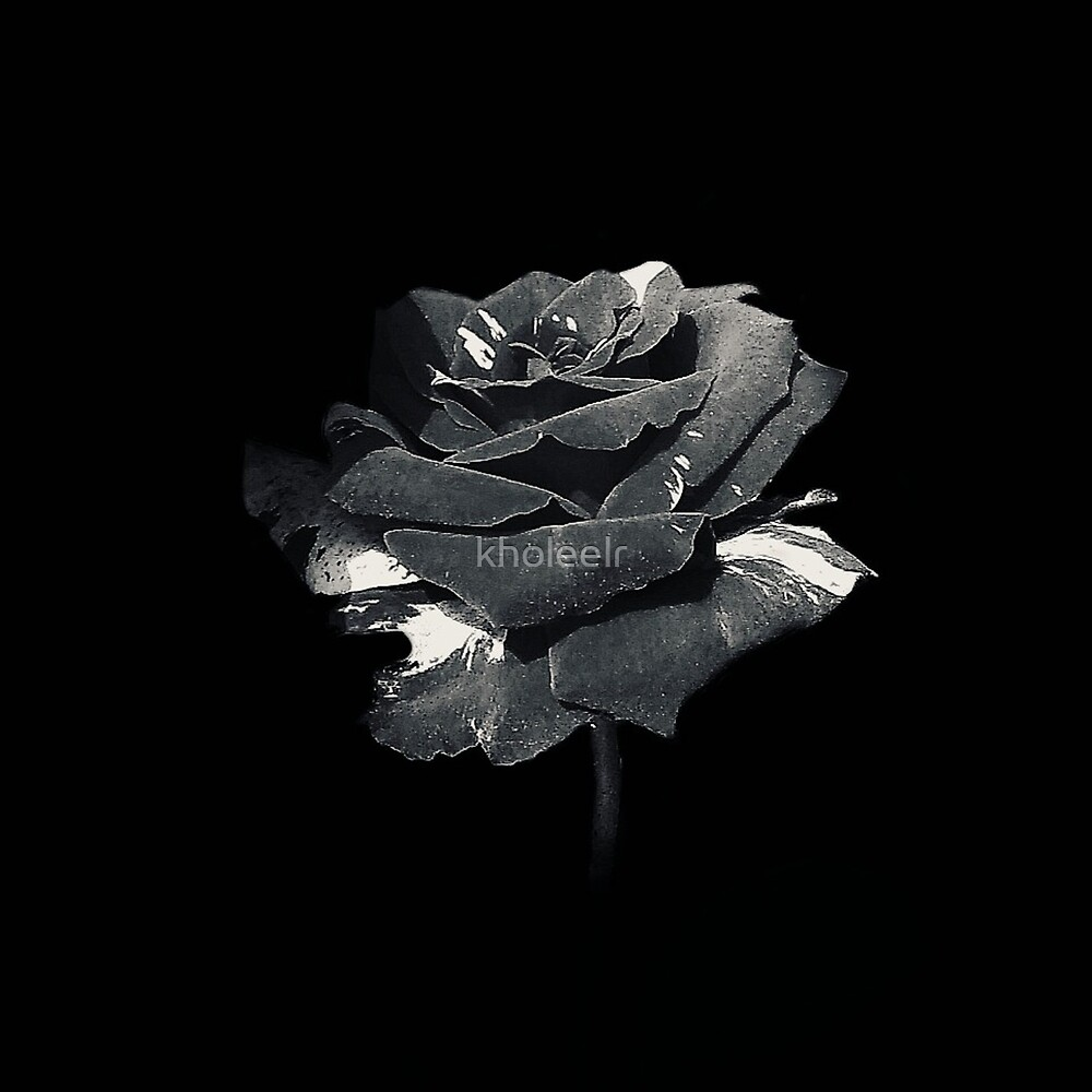 Black Rose by kholeelr