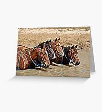 COOL WATERS & COOL HORSES Greeting Card