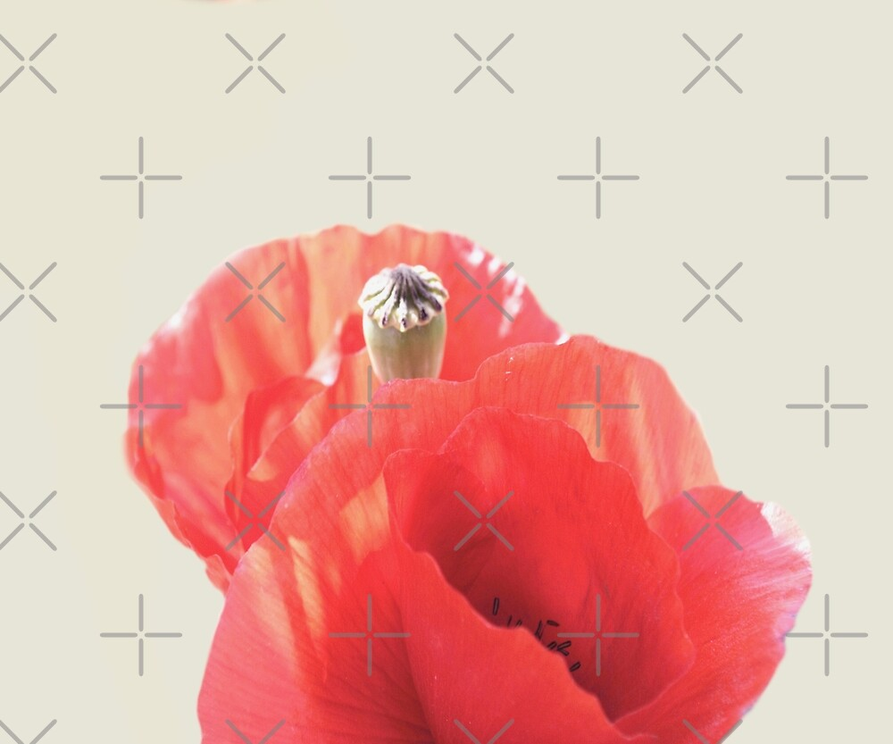 Poppies by by-jwp