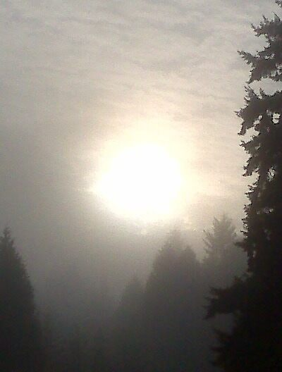 Misty Morning Sun #1 by Dawna Morton
