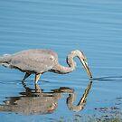 great blue heron fishing by AlRobinson
