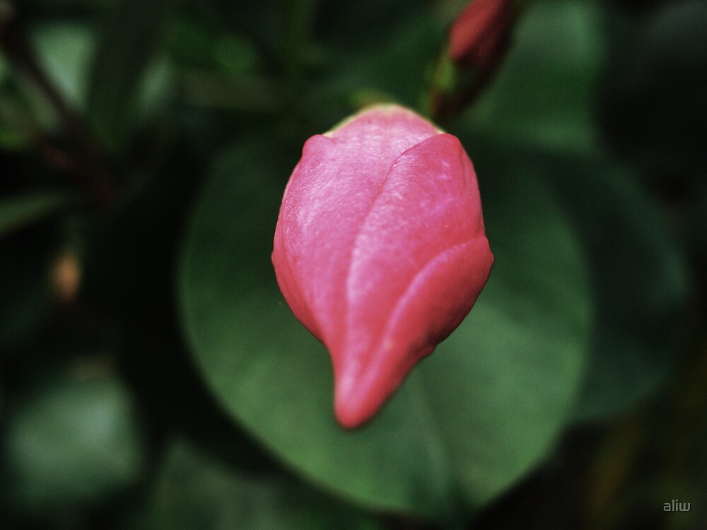 pink bud by aliw