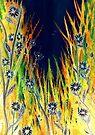 Moonlight Daisies by Linda Callaghan