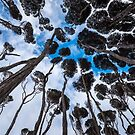 Through the Tea Tree Canopy by James Stone