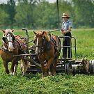 Amish Boy by wolftinz