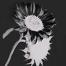 White on Black by Heather Friedman