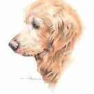 old golden retrier watercolor by Mike Theuer