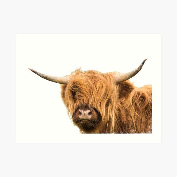 Highland Cow in Colour Art Print