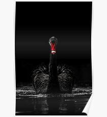 Black Swan - Low Key Poster
