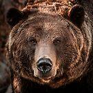Grizzly Bear Close-Up by George Wheelhouse