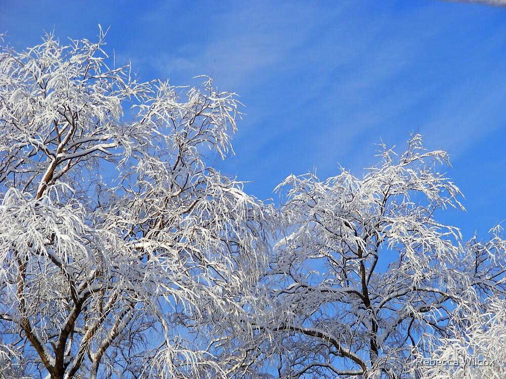 Winter Blues by Rebecca Brann