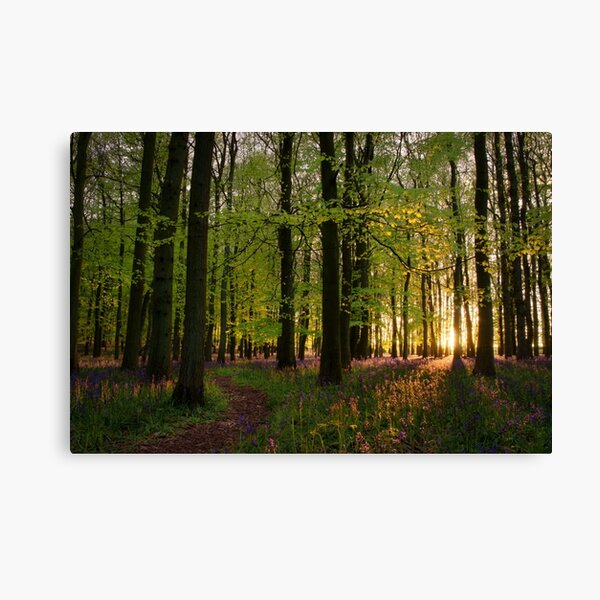 Pathway Through Sunset Bluebell Woods Canvas Print