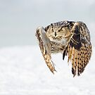 Eagle Owl - In Flight Over Snow by George Wheelhouse