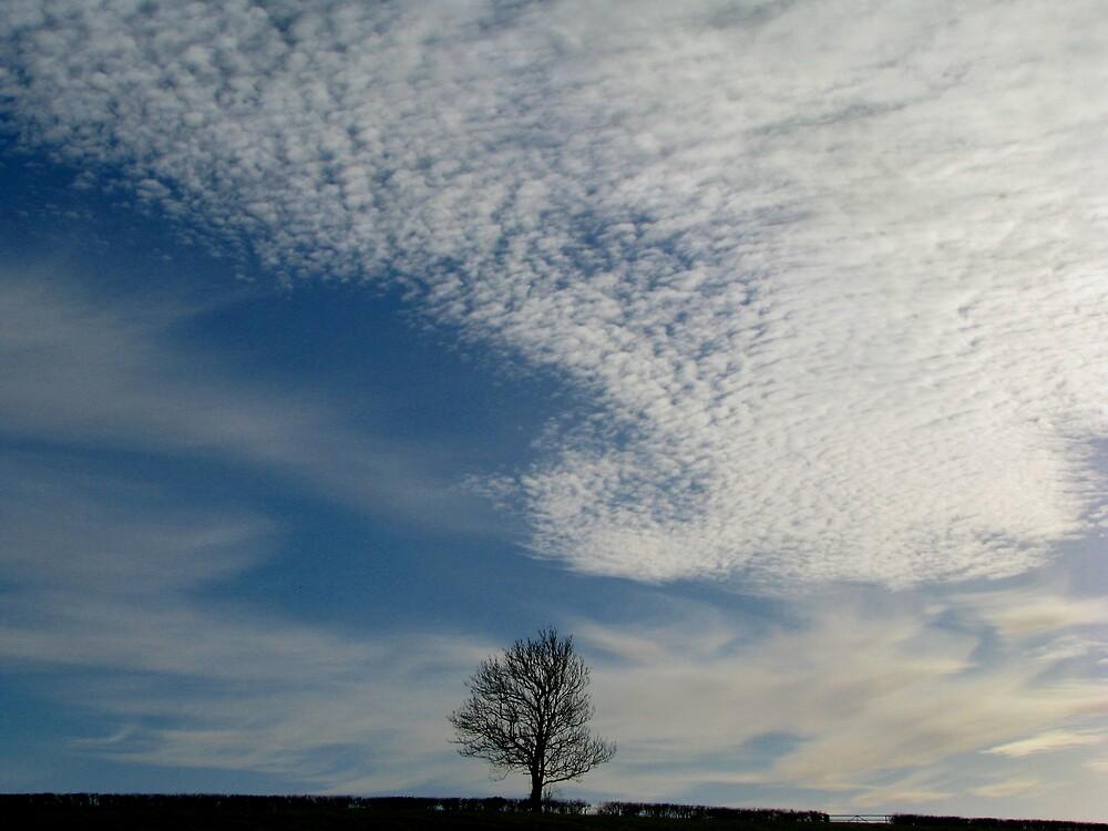 Lone tree by JUDI2008