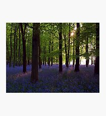 Bluebell Wood (Afternoon Sun) Photographic Print